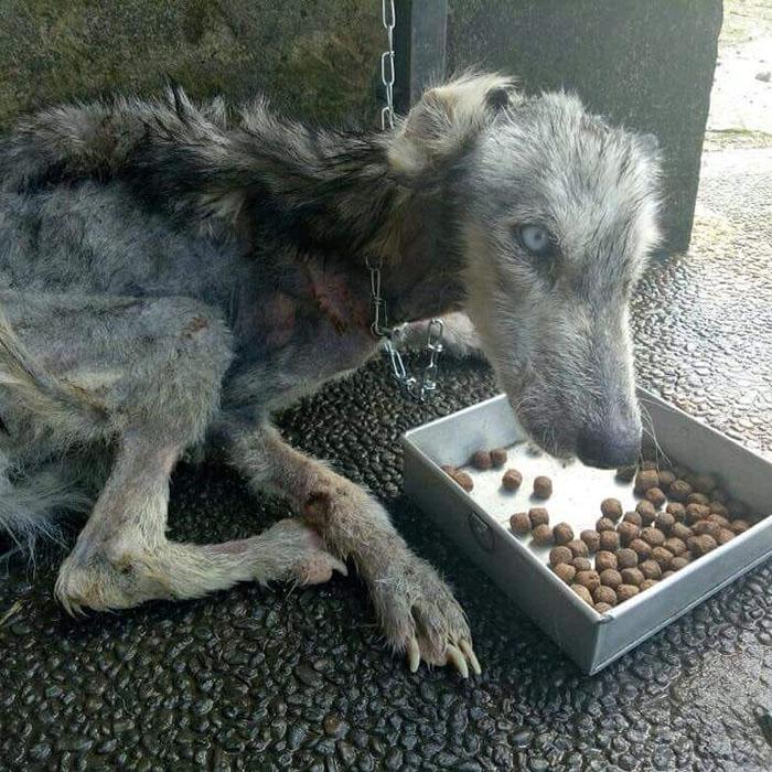 Местный житель спас бездомную собаку на Бали.