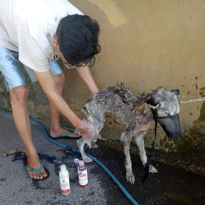 Рико стал заботиться о новой собаке.