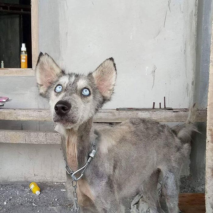 С момента, когда Рико нашел Хоуп и до полного выздоровления собаки, прошел почти год.