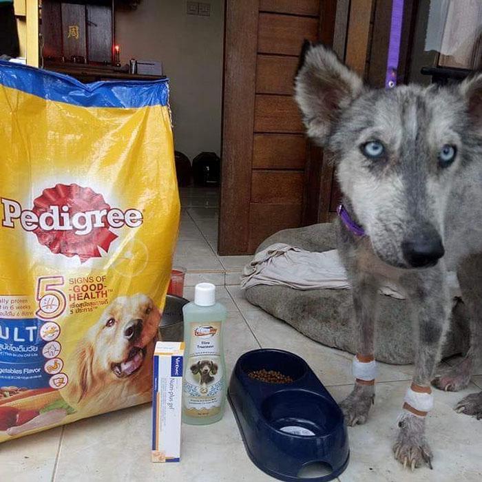 Рико старался дать собаке все необходимое для быстрого выздоровления.