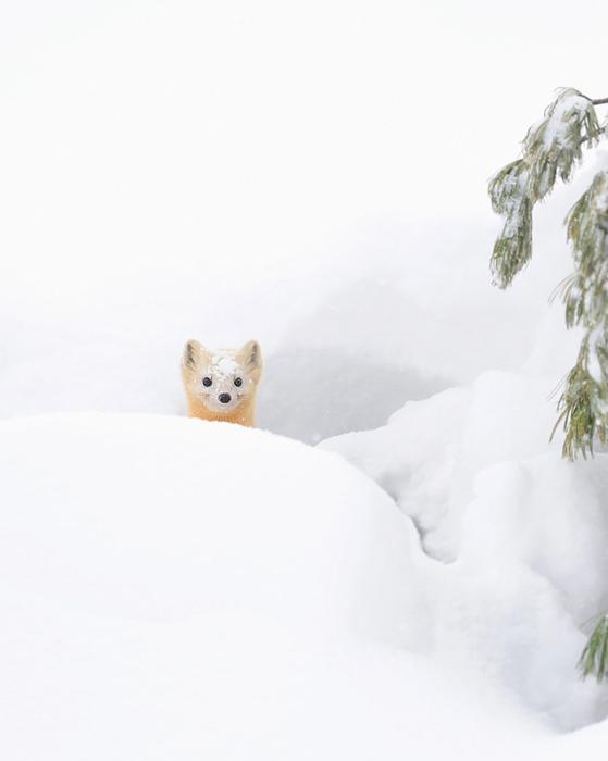 Очаровательные животные в снегу.