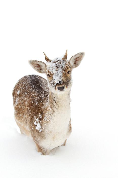 Животные в снегу. Фото: Jim Cumming.