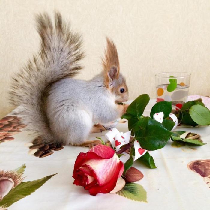 Белка Соня любит прятать орехи и семена по всему дому.