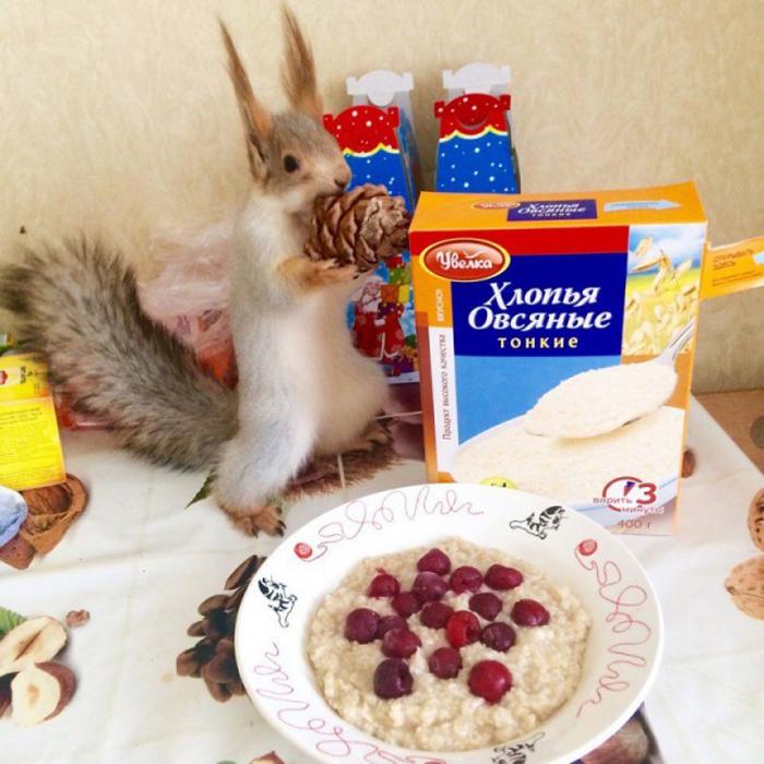 Белка Соня любит семечки, орехи и арбуз.