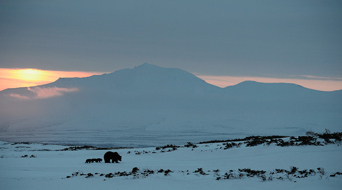 http://www.kulturologia.ru/files/u18046/spilenok-bear-03.jpg