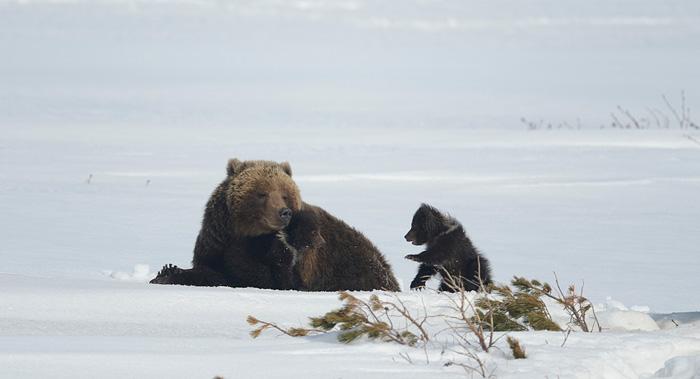 http://www.kulturologia.ru/files/u18046/spilenok-bear-07.jpg