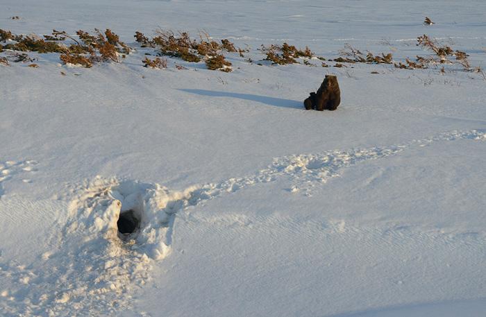 http://www.kulturologia.ru/files/u18046/spilenok-bear-09.jpg