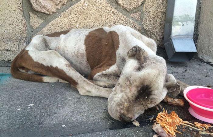 Такой собаку обнаружила полиция.  Фото: GRFF.