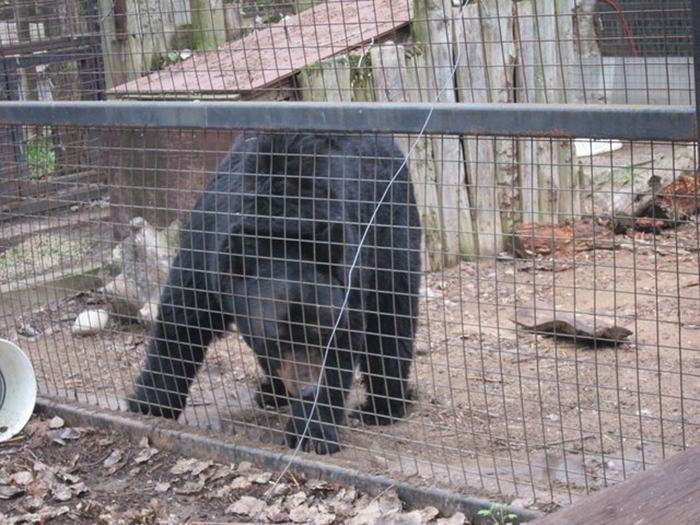Медведь Бен живет в маленькой клетке 7х7 метров.