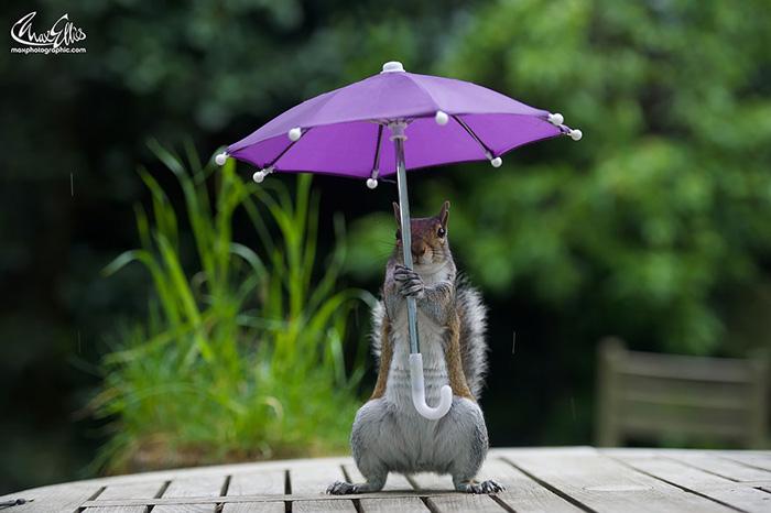 Фотосессия белки под дождем.