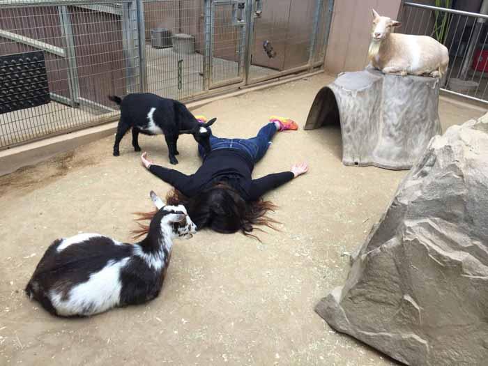 Козочки не против. Зоопарк в Сан Диего. Instagram stefdies.
