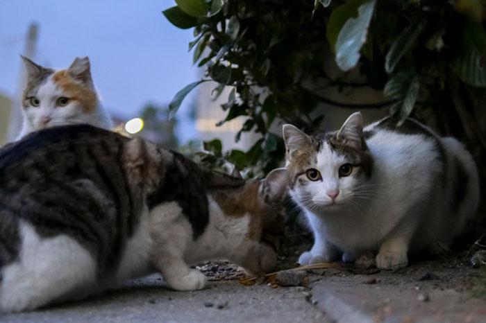 Уличные коты Джефферсона.