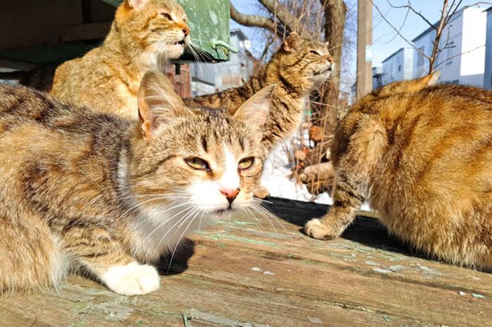 В городе живет три популяции котов по 10-30 особей.