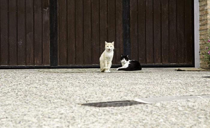 Местные жители были уверены, что полиция отвозит бездомных котов в приюты.