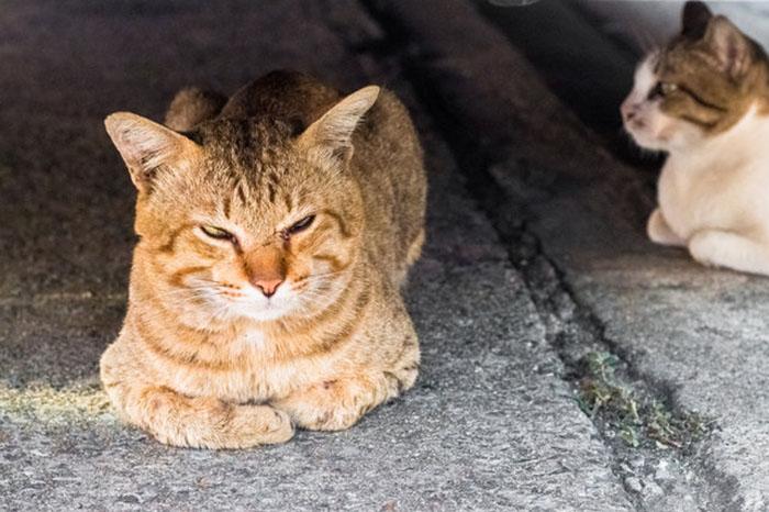 Полиция тайно убивала бездомных котов вот уже несколько последних лет.