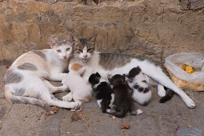 Альтернативой убийству является стерилизация животных.