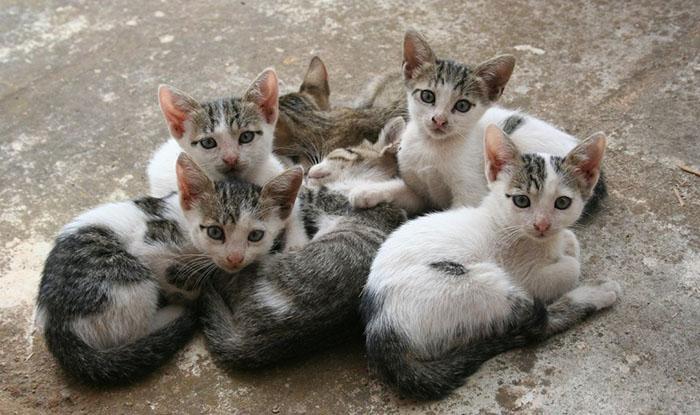 Проблема с уличными котами.