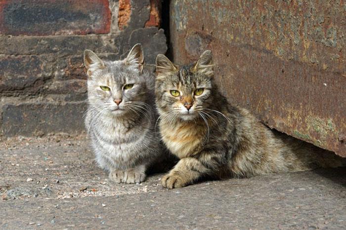 Бездомные коты.