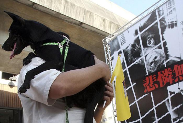 Во время протестов на Тайване. ¦ Фото:  dailymail.co.uk.