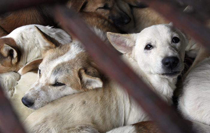 На Тайване запретили поедать мясо кошек и собак. | Фото: pri.org.