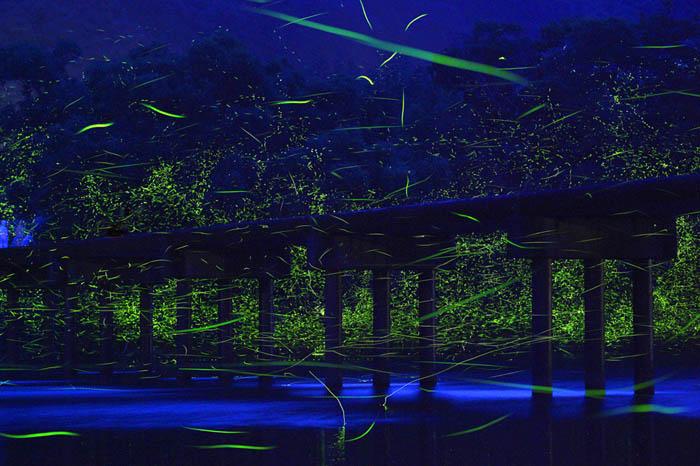 Мост над рекой Шиманто и летающие светлячки.