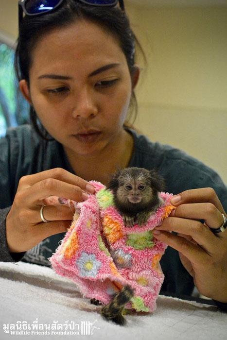 Максу посчастливилось найти приют в организации по защите диких животных.
