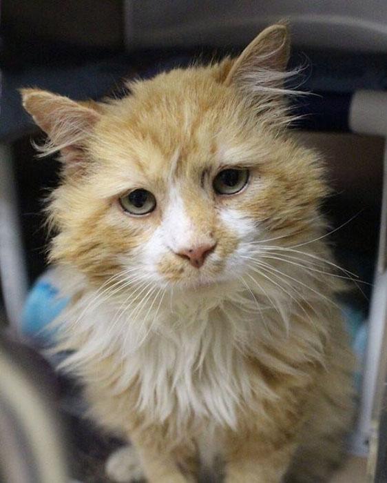 Тоби прожил семь лет в одном доме, прежде чем Ñозяева решили избавиться от животного.