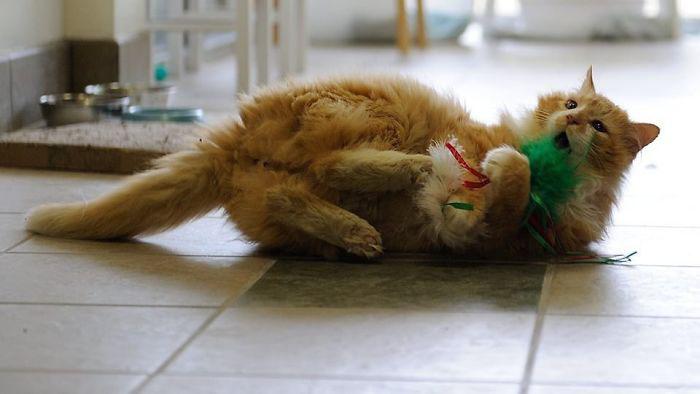 Сейчас кот живет у Мишель Пакетт, и очень доволен своей жизнью.