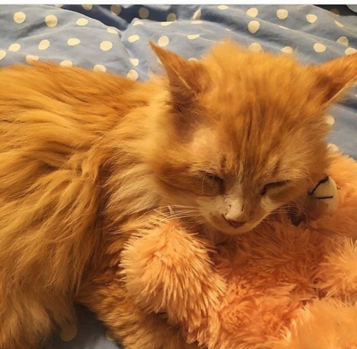 Сейчас кот отъелся и приобрел прежний ухоженный вид.
