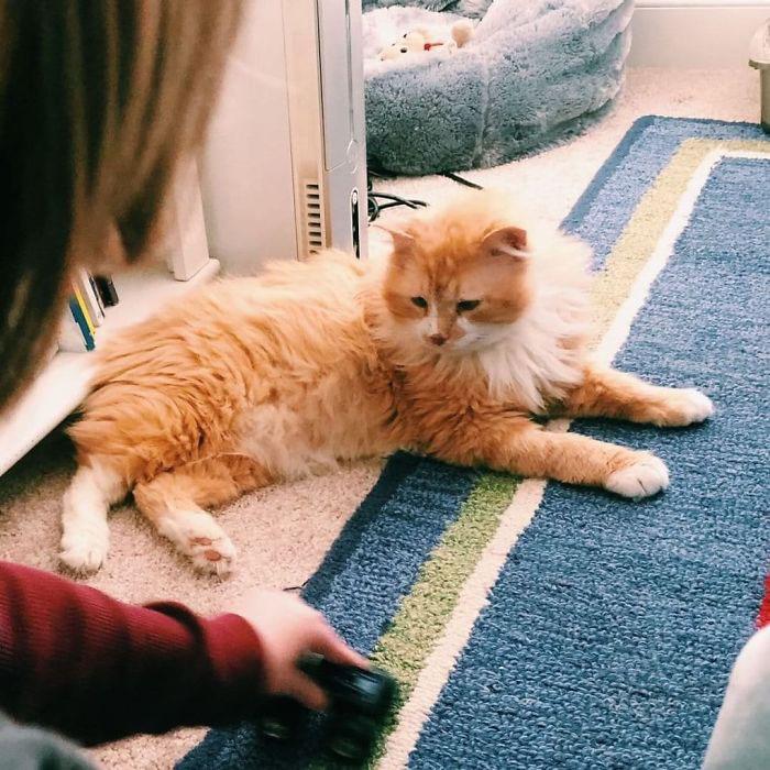 Кот явно доволен новой жизнью.