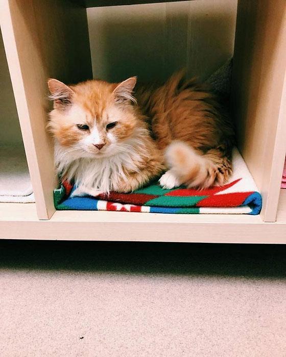 Кот не смог понять, почему его внезапно отвезли в новую семью.