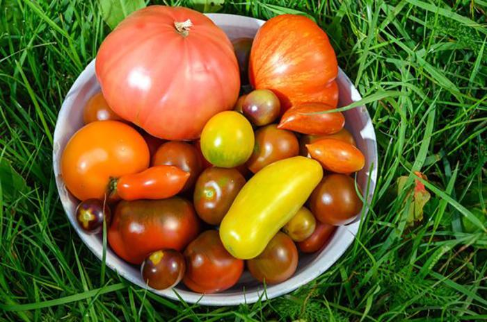 Разные виды томата.