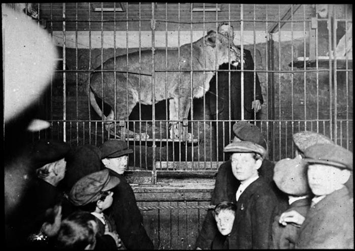 Посетители смотрят на льва в клетке. 1927г.