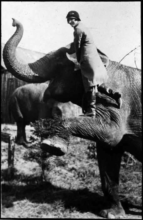 Девушка позирует на ноге слона.