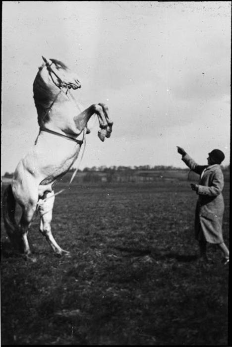 Женщина обучает лошадь трюкам.