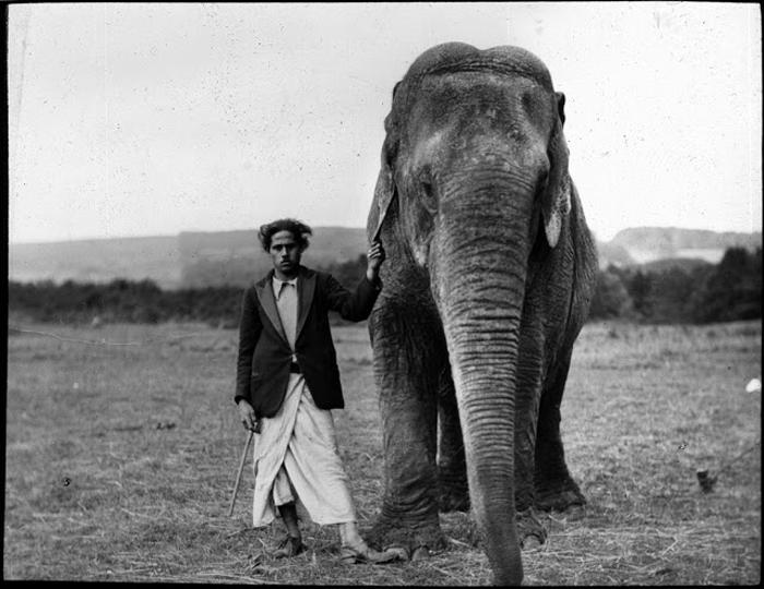 Мужчина стоит в поле со слоном.