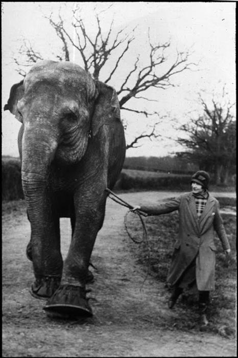 Женщина ведет слона.
