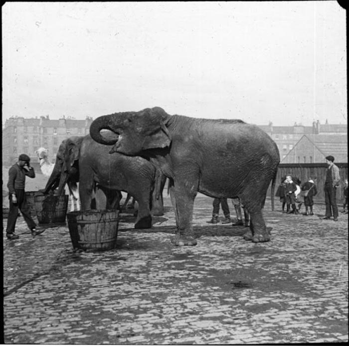 Слоны пьют воду.