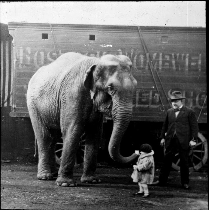 Слон здоровается с маленькой девочкой.