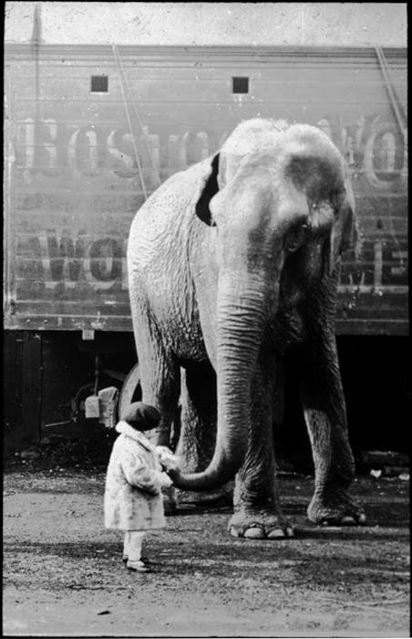 Девочка кормит слона.