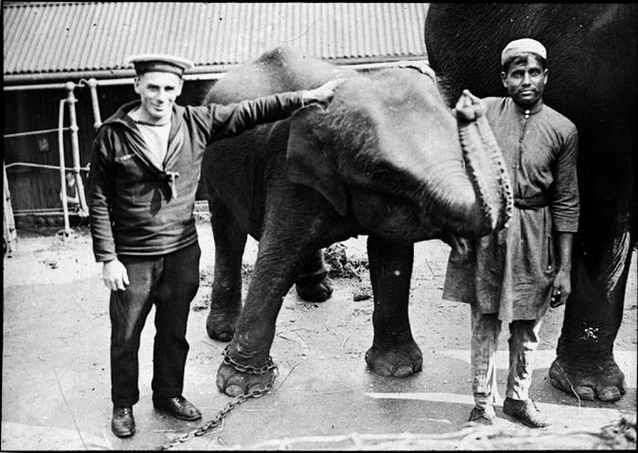 Фотография со слоном.