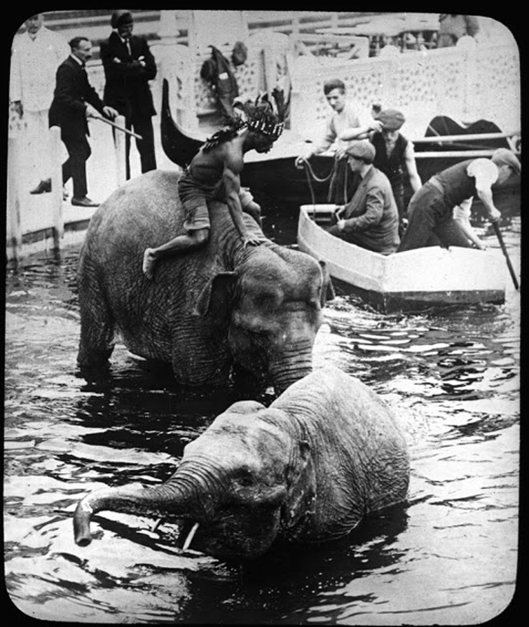Слоны заходят в воду.