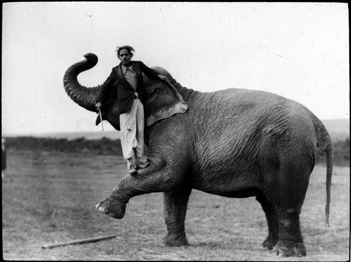 Мужчина позирует со слоном.