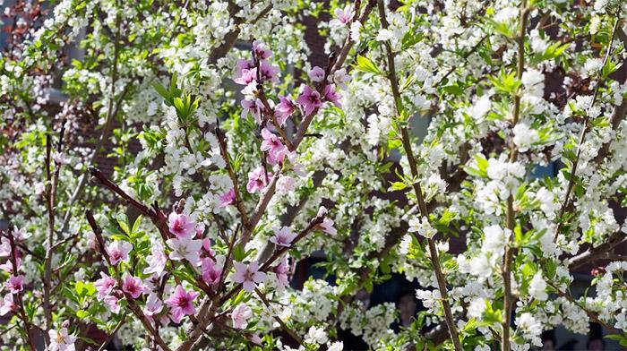 Растения, на которых растут фрукты - Бугага 15