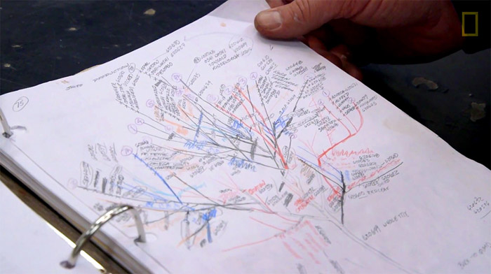 Для каждого дерева составляется план-график прививки сортов, чтобы в результате дерево выглядело максимально гармонично.