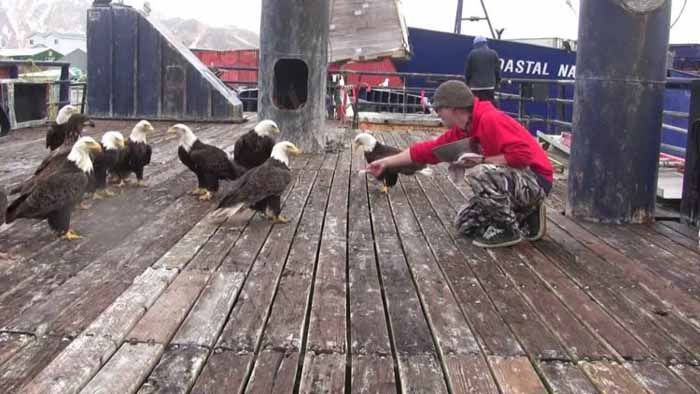 Птиц привлекает близость свалки и порта.