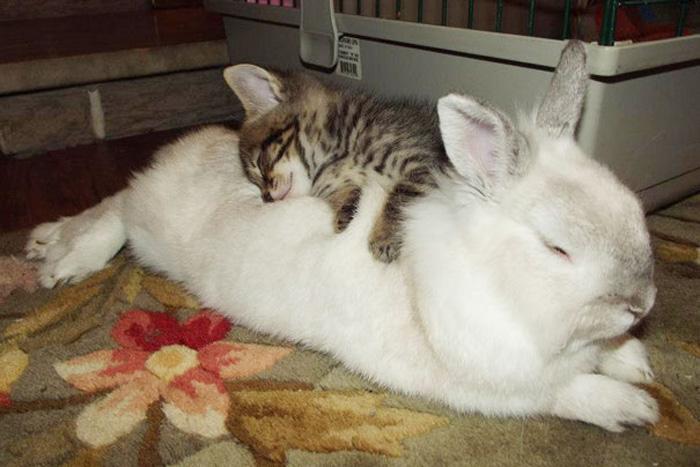 Кролик и котенок.
