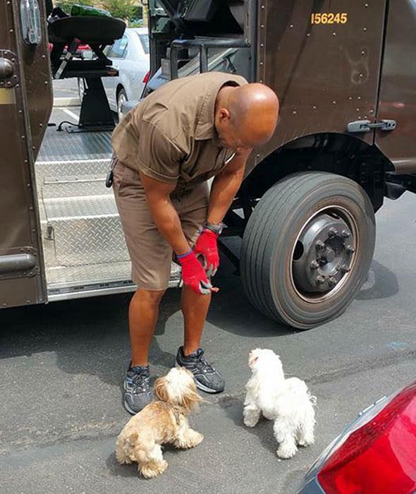 Гизмо и Лео обожают почтальона.