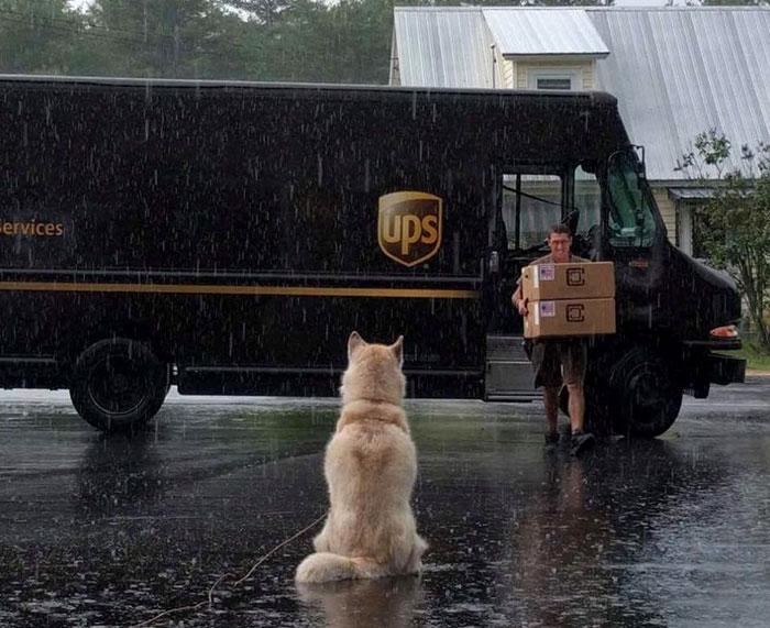 Никита ждет почтальона, и эта собака готова ждать в любую погоду и при любых условиях.