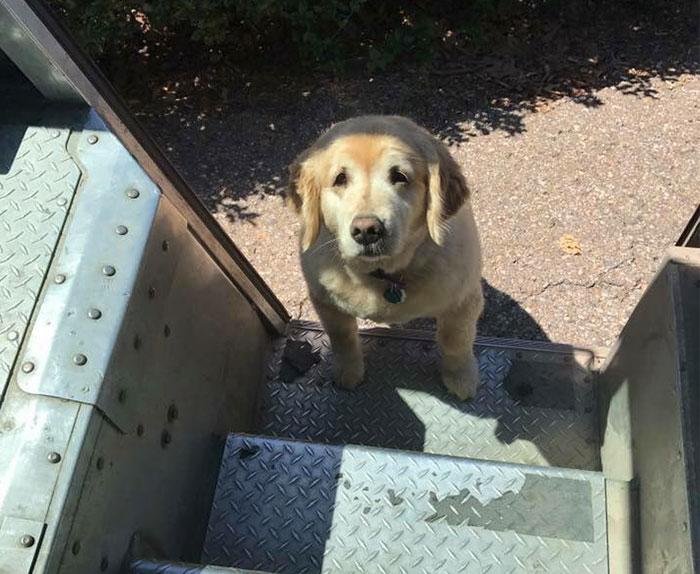 Руби абсолютно слепой, но это не мешает ему распознавать почтовый фургон по звуку и следовать за почтальоном, пока не получит свою вкусняшку.